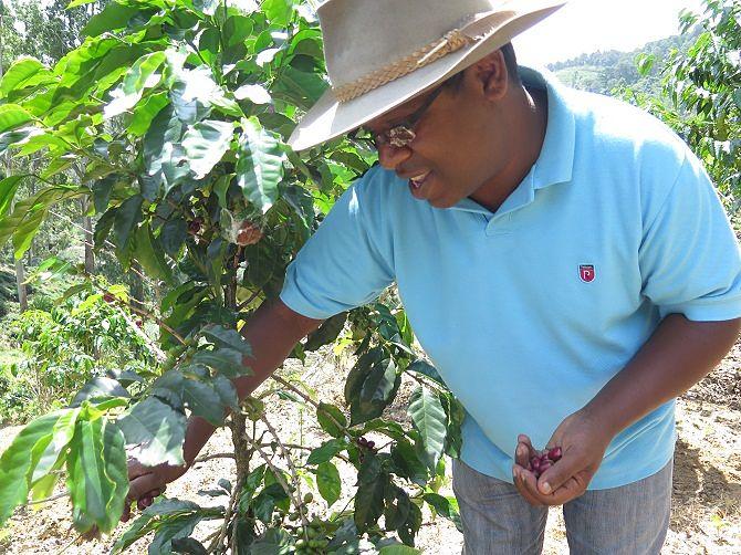 Coffee fresh off the bush re_opt