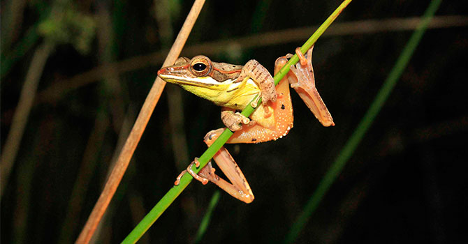 Trail Blazing Frog Tour – Jetwing's Frog Prince