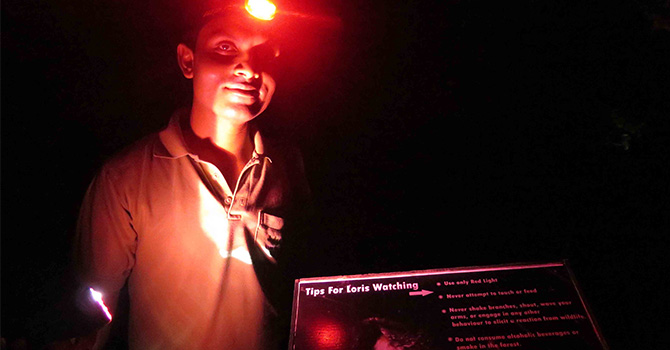 Vil Uyana's Red Light District –Slender Loris Watching