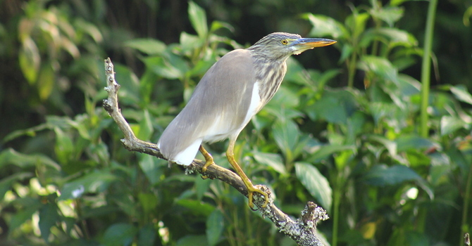 Victoria Park – Urban Paradise for Birds