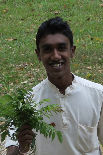 Pick your own curry leaves and Juice them
