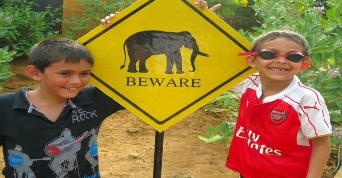 Meet Netta Kotaa – Jetwing Yala's Elephant CCTV Movie Star