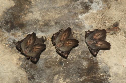 Do a bat tour with Jetwing naturalist Chamara  Photo by Chamara