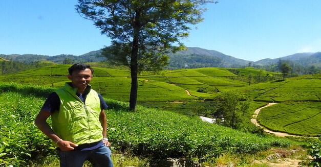 Tea Trail Walk